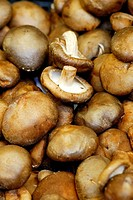 ´Shiitake´ mushroom (Lentinus edodes). La Boquería market. Barcelona. Catalonia. Spain.