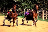 France, Calvados (14), Auge country, trotting horses training at Sens breeding farm
