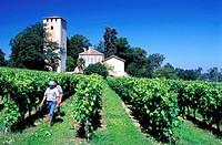 France, Gers (32), vineyard near Lamothe tower