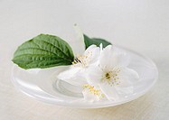 Mock orange flowers and leaves in dish