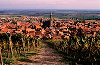 France, Bas-Rhin (67), Dambach-la-Ville, village dominated by its vines