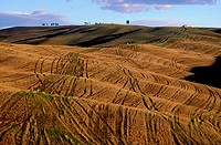 Italy, Tuscany, landscape of Siena county on the Crests Road