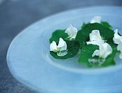 Nasturtium leaves and blossoms on plate