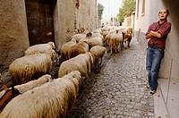 Descent from Alps pastures. Festa della Desnalpa. Settimo Vittone. Piedmont. Italy.