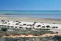 australia, shark bay, beach