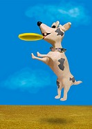 Dog jumping in the air to catch a Frisbee