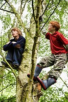 Two Boys in Tree