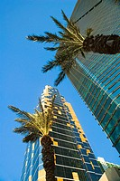 Low angle view of palm trees in front of skyscrapers, Miami, Florida, USA