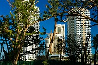 Low angle view of buildings behind trees, Miami, Florida, USA