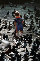 Rear view of a small boy standing amidst pigeons, San Juan, Puerto Rico