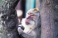 Close-up of a monkey on a tree, Bali, Indonesia (thumbnail)