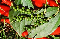 Close-up of peppercorns on leaves, Bali, Indonesia