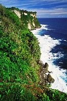 Plants growing on a cliff along the sea, Bali, Indonesia