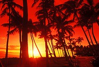 Silhouette of palm trees on the beach, Hawaii, USA