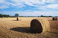Hay bales in a field, Texas, USA