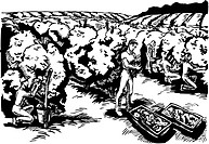 People harvesting berries black and white