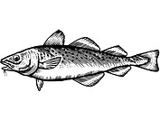A black and white drawing of a cod
