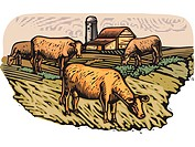 Cows grazing on a pasture with a building in the background