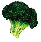 An Illustration of a broccoli