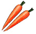 Two carrots drawn over a white background