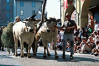 Man, with, yoke, of, oxen, public, festival, Sagre, Asti, Piemont, Italy