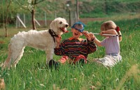 Children, playing, with, Mixed, Breed, Dog