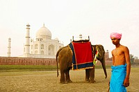 Young man standing near an elephant, Taj Mahal, Agra, Uttar Pradesh, India