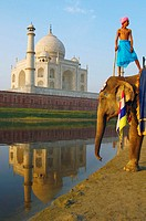 Low angle view of an elephant handler standing on an elephant, Taj Mahal, Agra, Uttar Pradesh, India