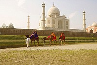 Tourist riding camels, Taj Mahal, Agra, Uttar Pradesh, India