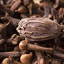 Close-up of a Black Cardamom with cloves