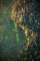 Cut forest area, aerial view. Lappland. Sweden