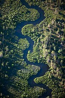 River meanders in wetland, aerial view. Sorsele. Lappland. Sweden