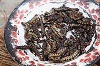 Dried worms, Kibidwe quarter, Bobo Dioulasso. Burkina Faso