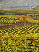 High angle view of vineyards with village in background, Wachau, Austria