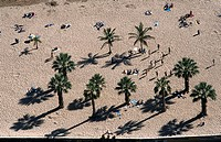 Aerial view of tourists and palm trees on beach, Playa de las Teresitas, Tenerife, Canary Islands, Spain