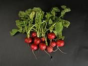 Radishes on a studio background