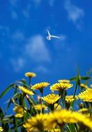 Wild flowers & bird nature