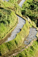 Described as the eighth wonder of the world, carved out of the hillside by Ifugao tribes people 2000 to 3000 years ago, they were declared a UNESCO Wo...