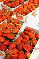 California. San Francisco. Ferry Building Farmer's Market. Strawberries