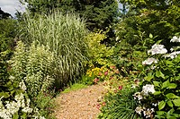Snowflake´ Oakleaf Hydrangea, ´Nora Leigh´ Phlox foliage, ´Cosmopolitan´ Miscanthus, ´Lanath White´ Hydrangea, Daylilies in sunny perennial border [Hy...