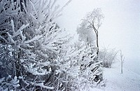 Winter-landscape, trees, shrubs, snow, series, landscape, plants, snow-covered, snow, snowed in cold, season winters wintry, nature, habitat, silence,...