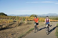 Small group of people riding bicycles in wine country