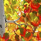 Illustration of leaves on a tree in autumn
