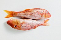 Two red mullet