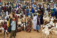 Niger. Sunday market at Ayorou on the Niger river bank. Cattle market.
