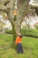 Young boy looking at teddy bear in tree