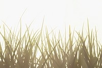Close up of sunlit grass blades