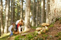 Mother and daughter searching mushrooms in forest
