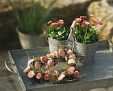 Bellis plants in pots & heart-shaped wreath of Bellis