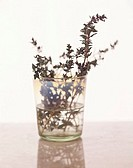Thyme in glass
